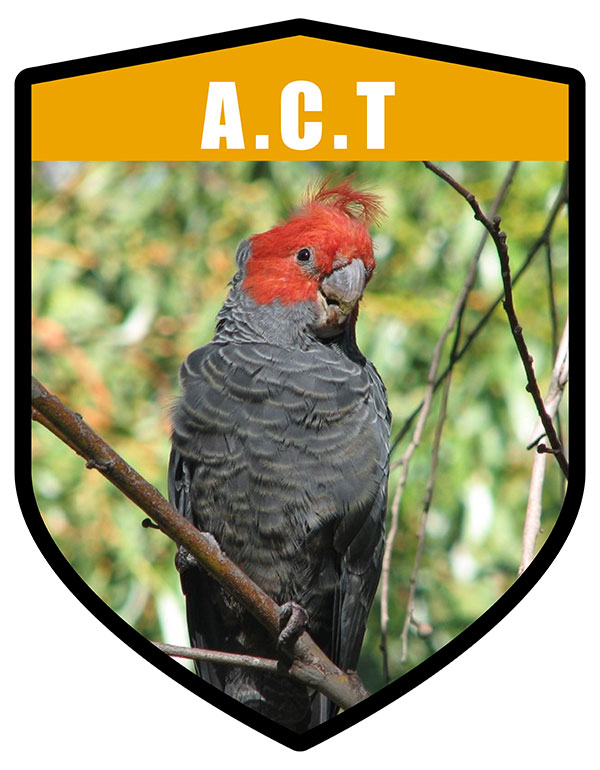 ACT State Bird Gang Gang Cockatoo Shield