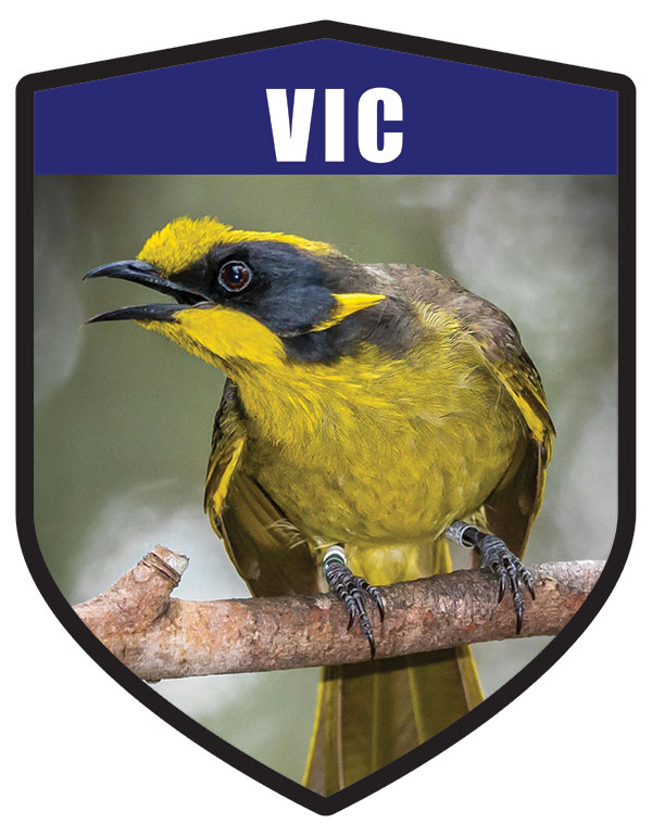 VIC State Animal Helmeted Honeyeater Shield